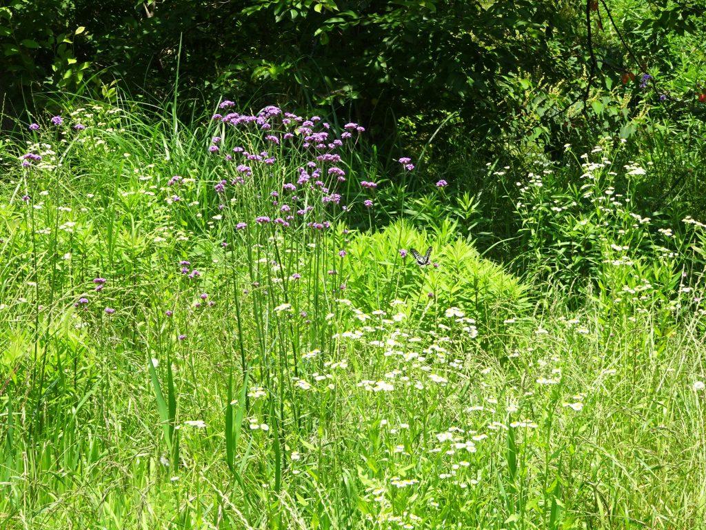 仲夏の草叢
