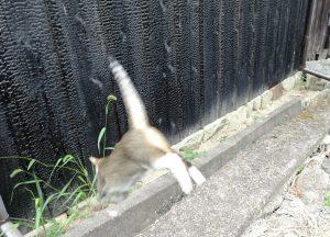 ねこ、風太 ジャンプ