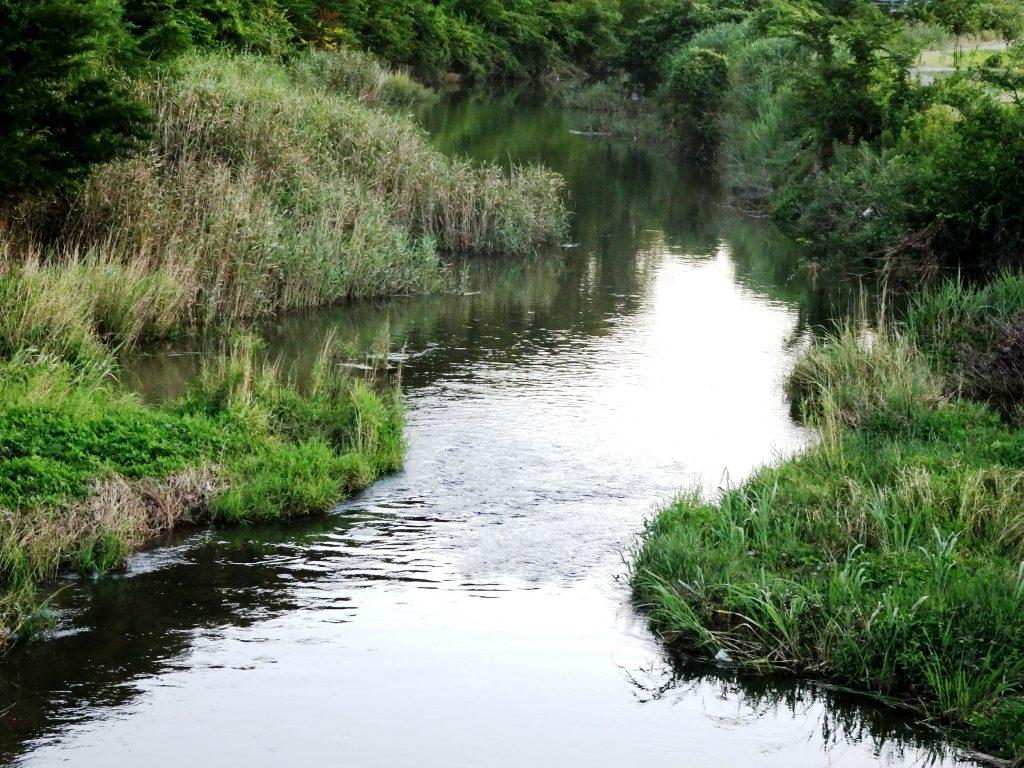 夏の川夕景