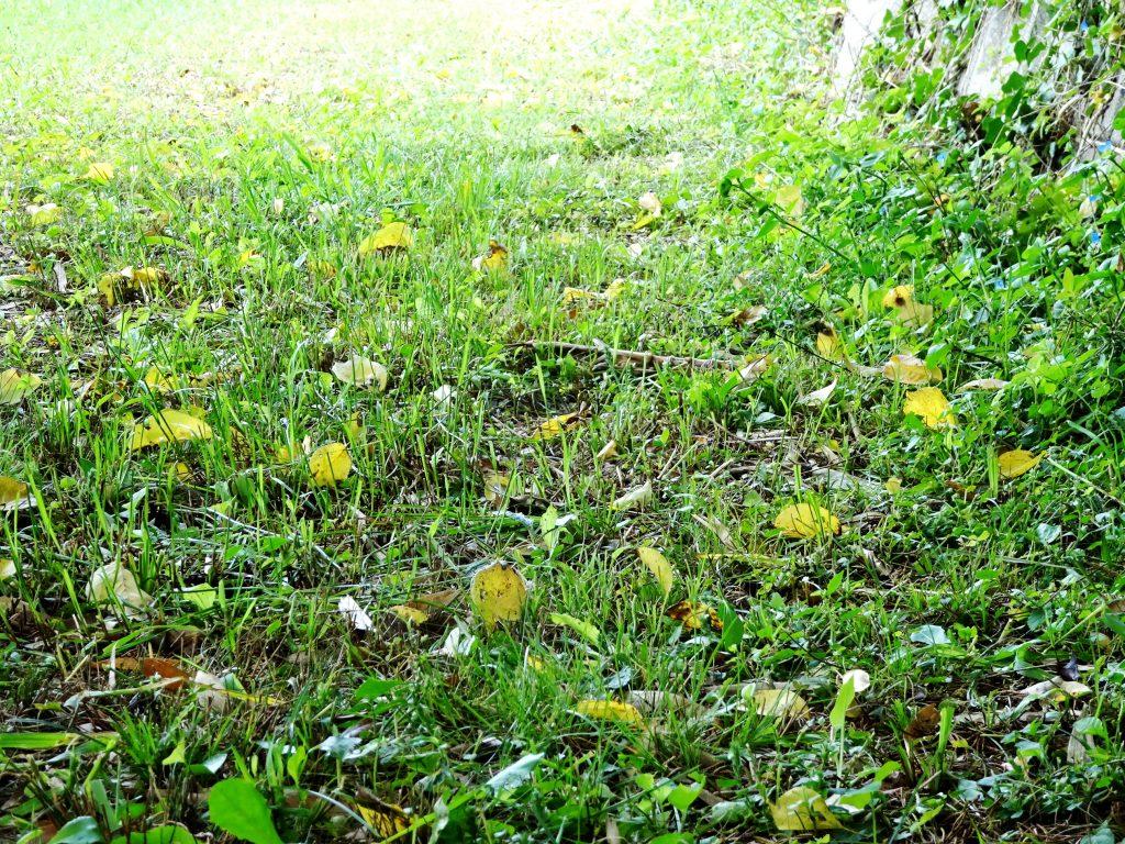 梅の木の下の道