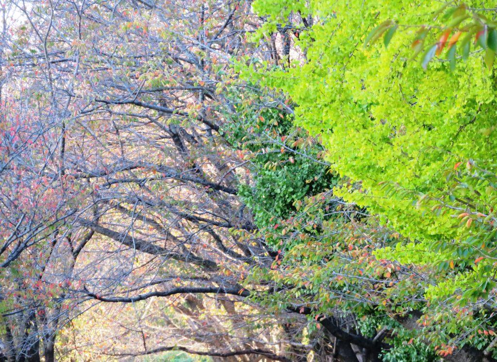 秋、ある日の午後