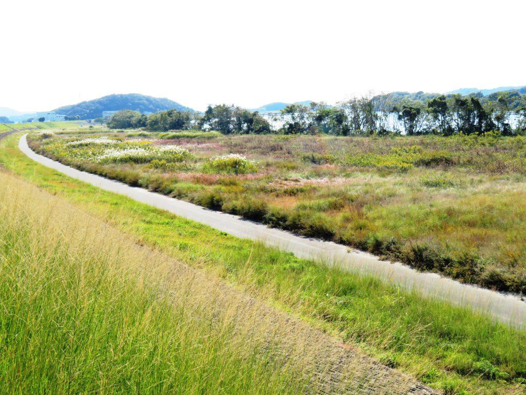 秋の河川敷散歩
