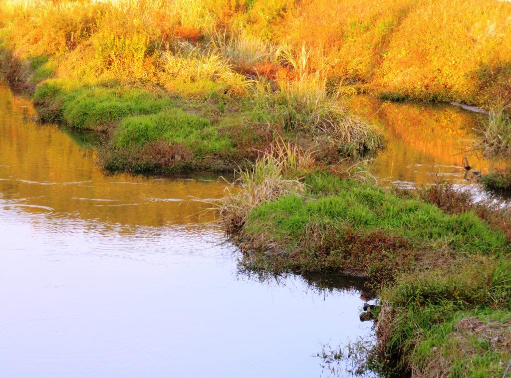 秋の田舎の川辺