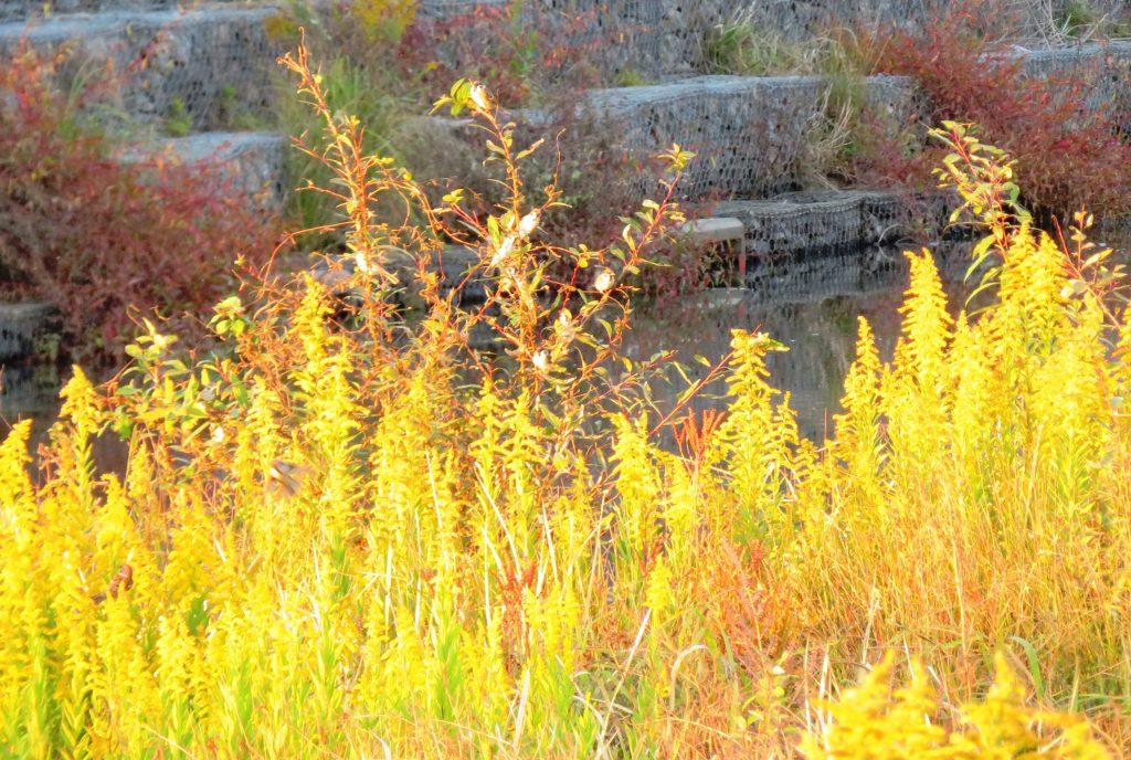 秋の田舎の川辺 雀
