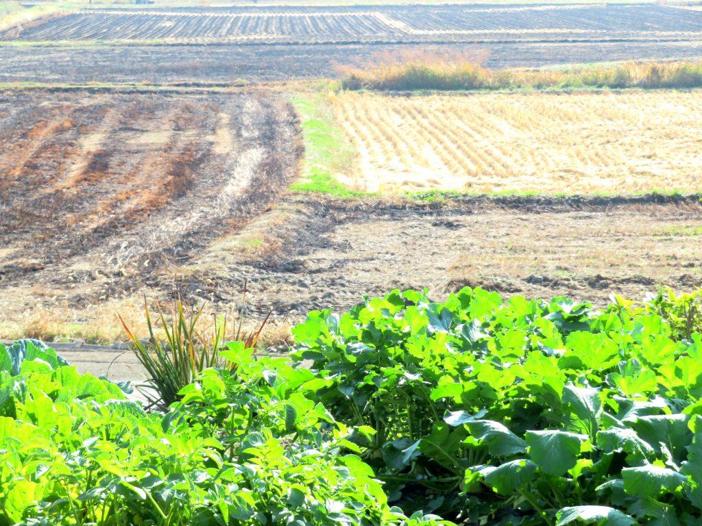 秋の畑と田んぼ