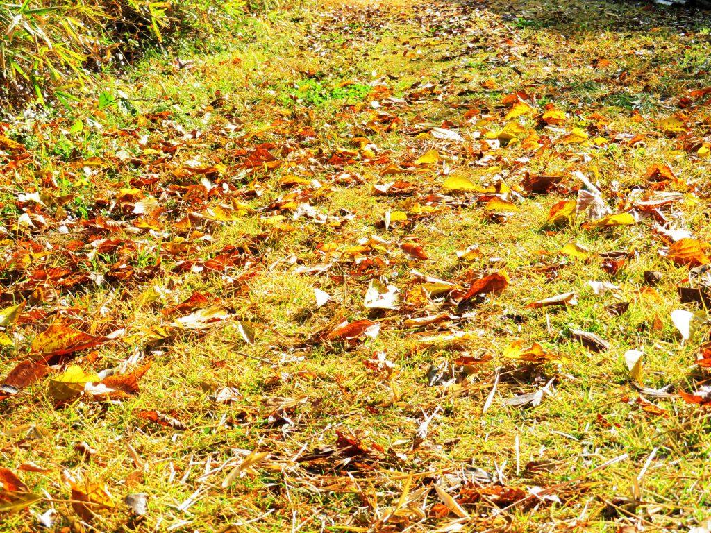 落葉の田舎道