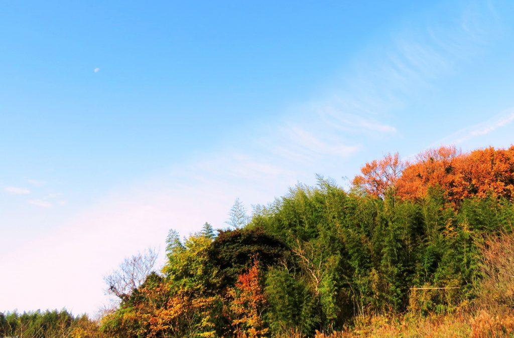 12月、朝の田舎