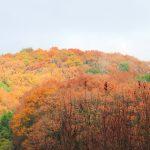 雨のち晴れのち雨 12月田舎散歩 (nya.768)