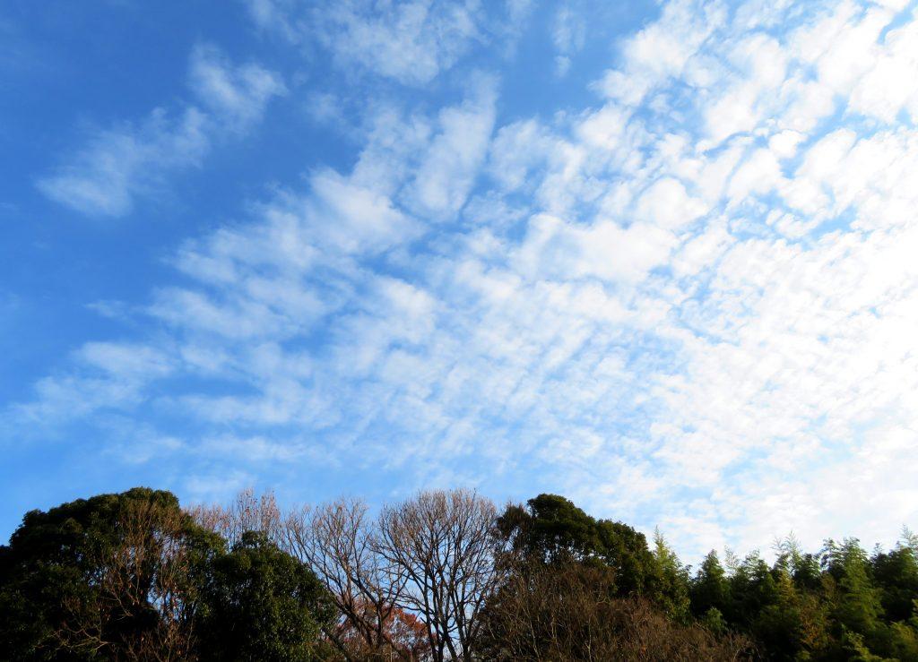 夜明けのうろこ雲