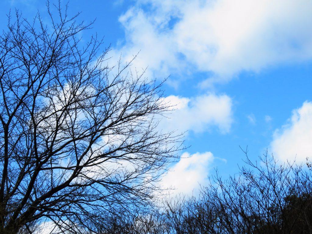 冬木立 桜