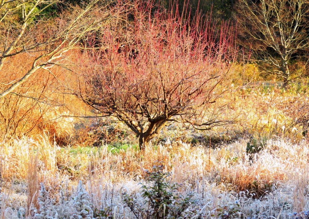 霜の日の朝散歩