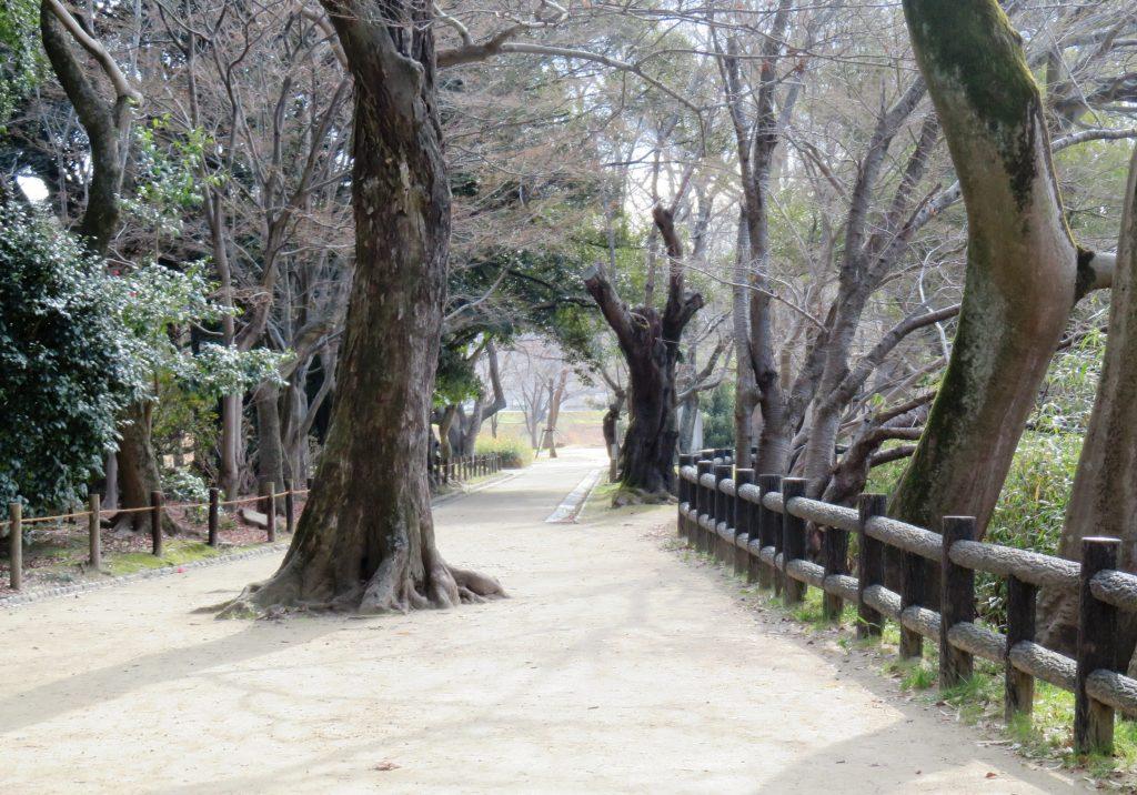冬の遊歩道