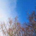 晴れ時々雪 風太と散歩(nya.824)