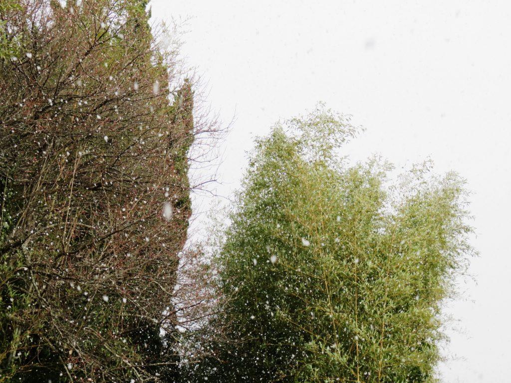 晴れ時々雪