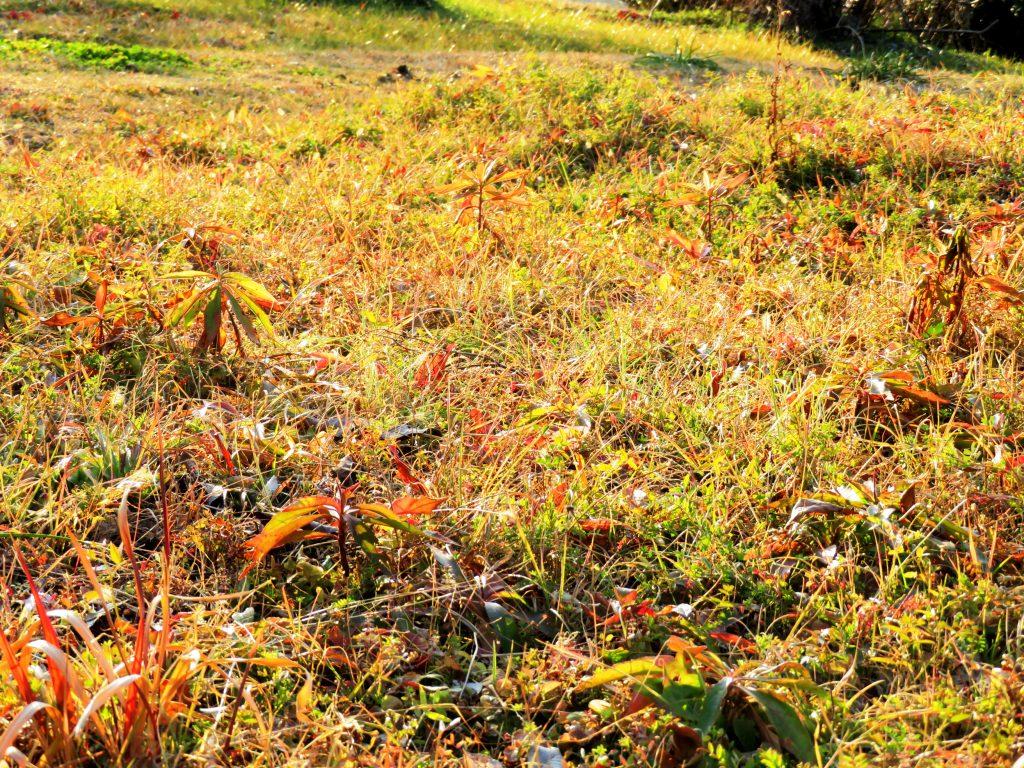 2月の草原