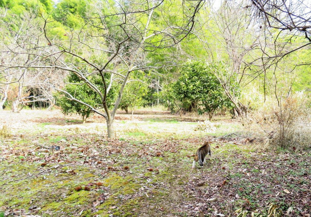 風太と栗林