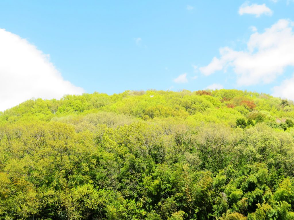 春の田舎の山