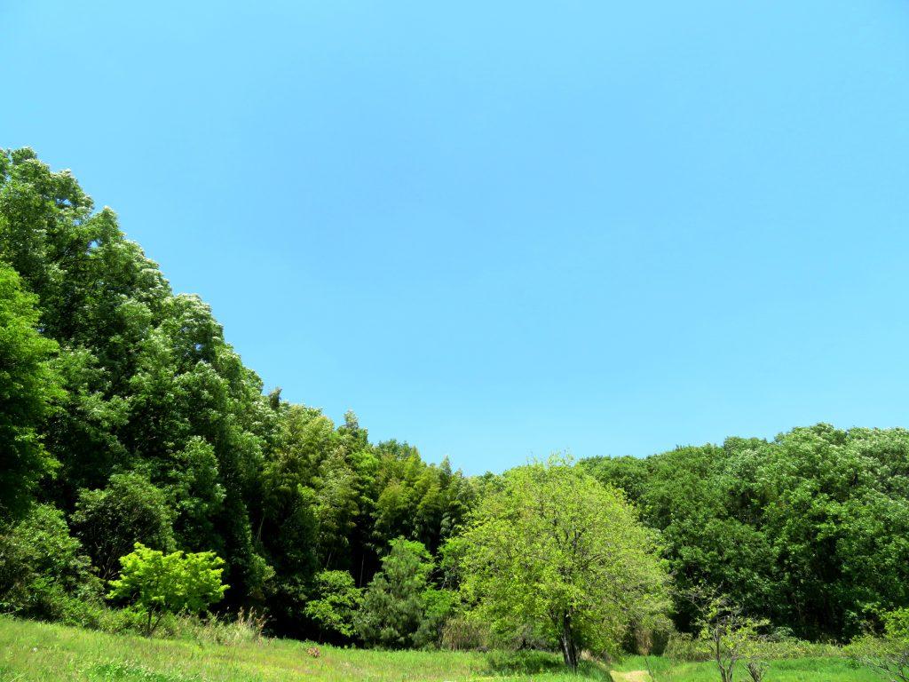 初夏の田舎
