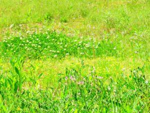 5月の田舎