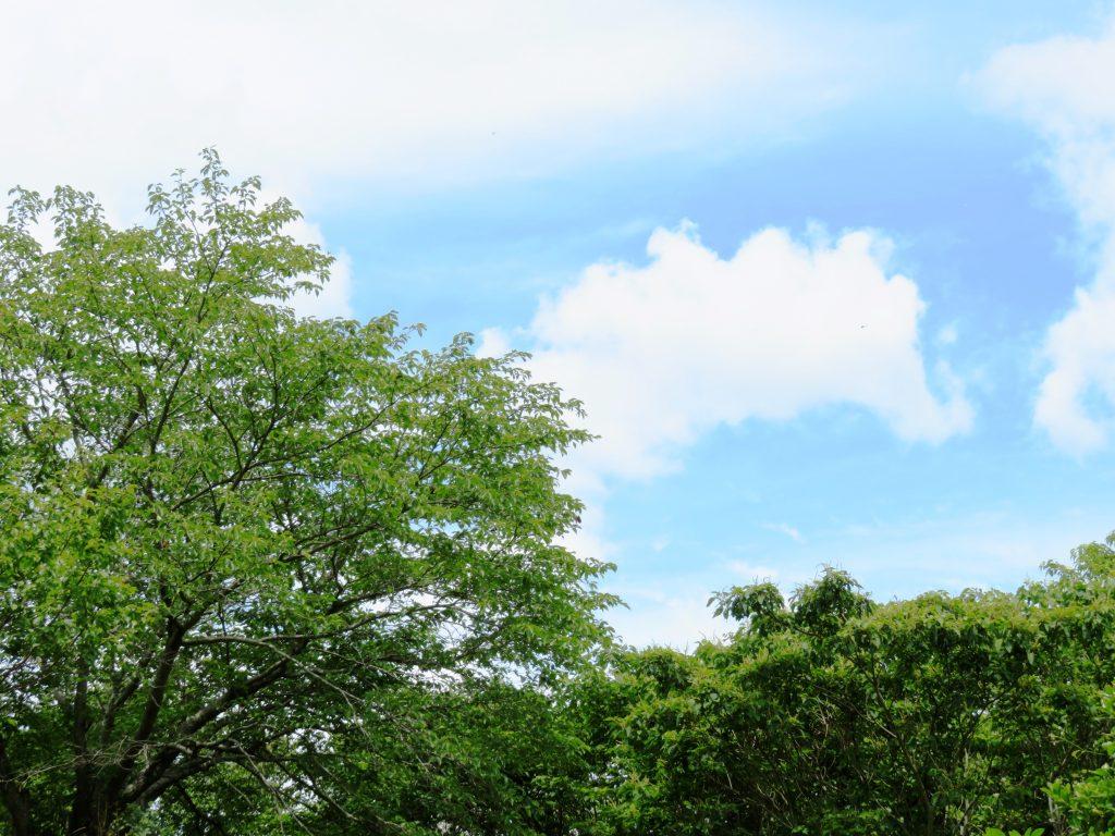 6月の田舎