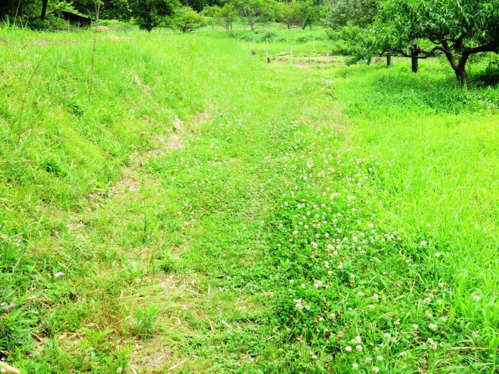 夏の田舎道