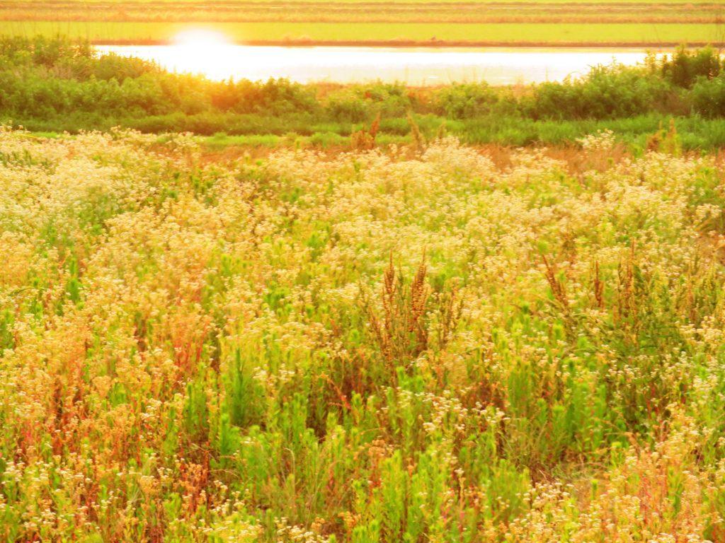 夏の田舎夕景