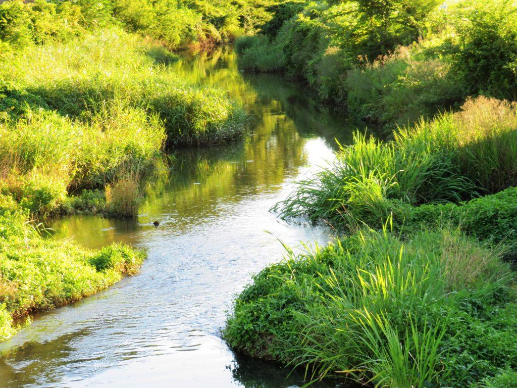 夏の川の夕景