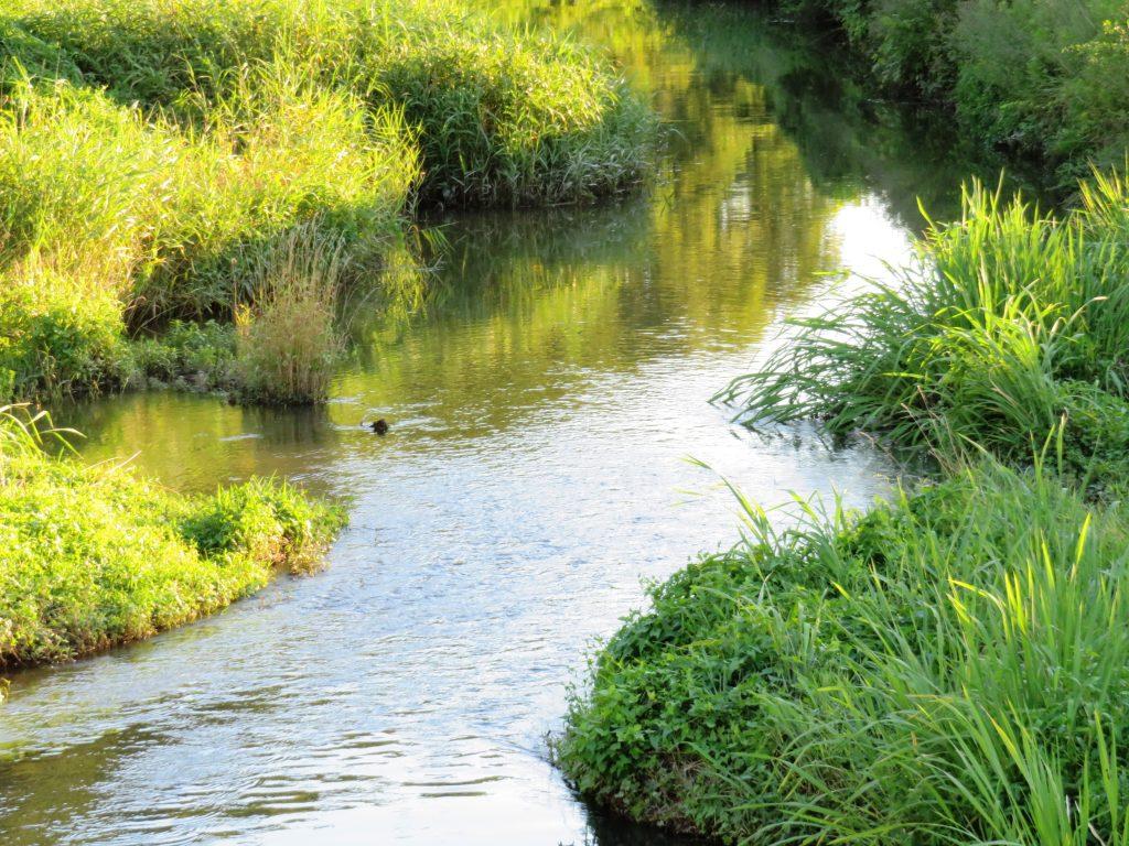 夏の川 夕景