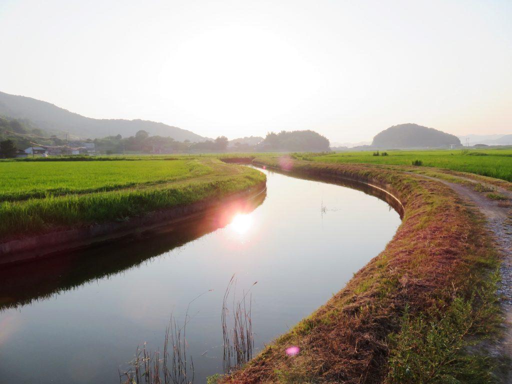 夕方の用水路
