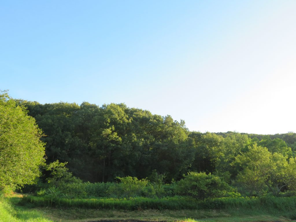 夏の田舎 早朝