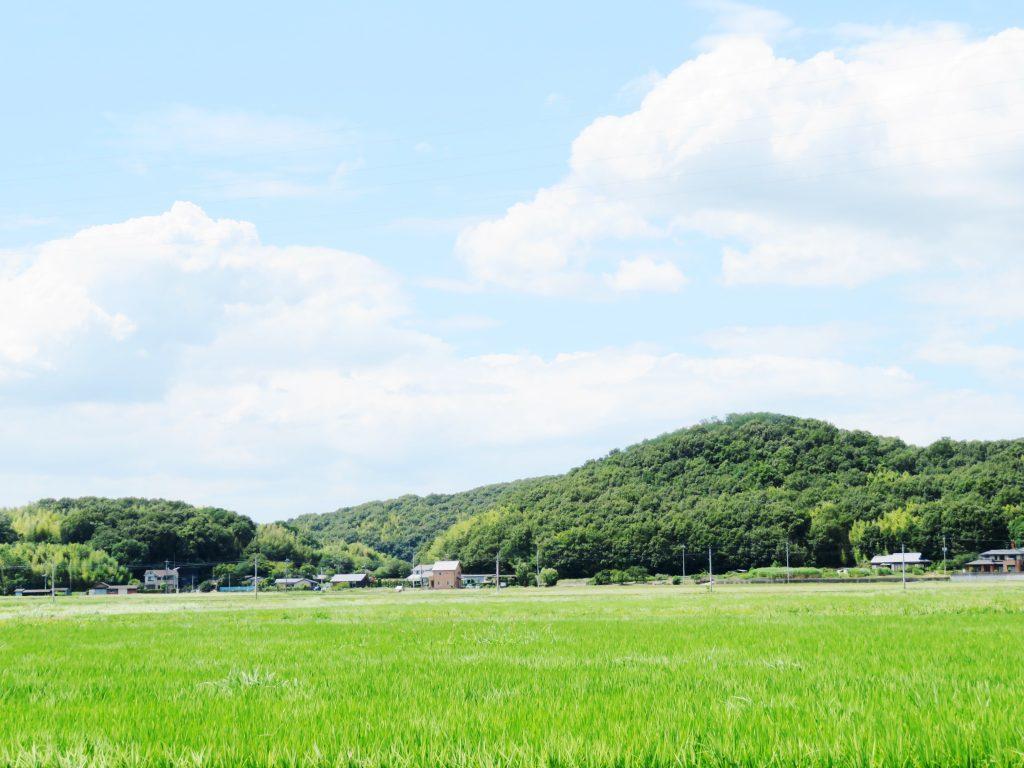 8月の田舎