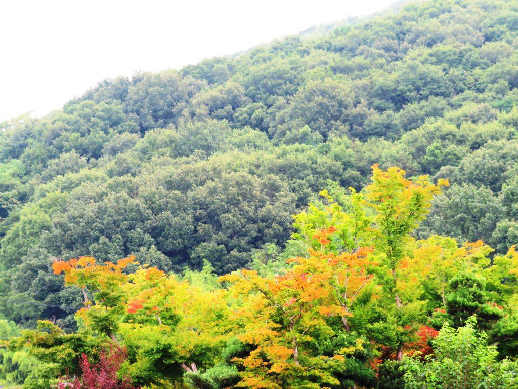 料理屋さんの庭の紅葉