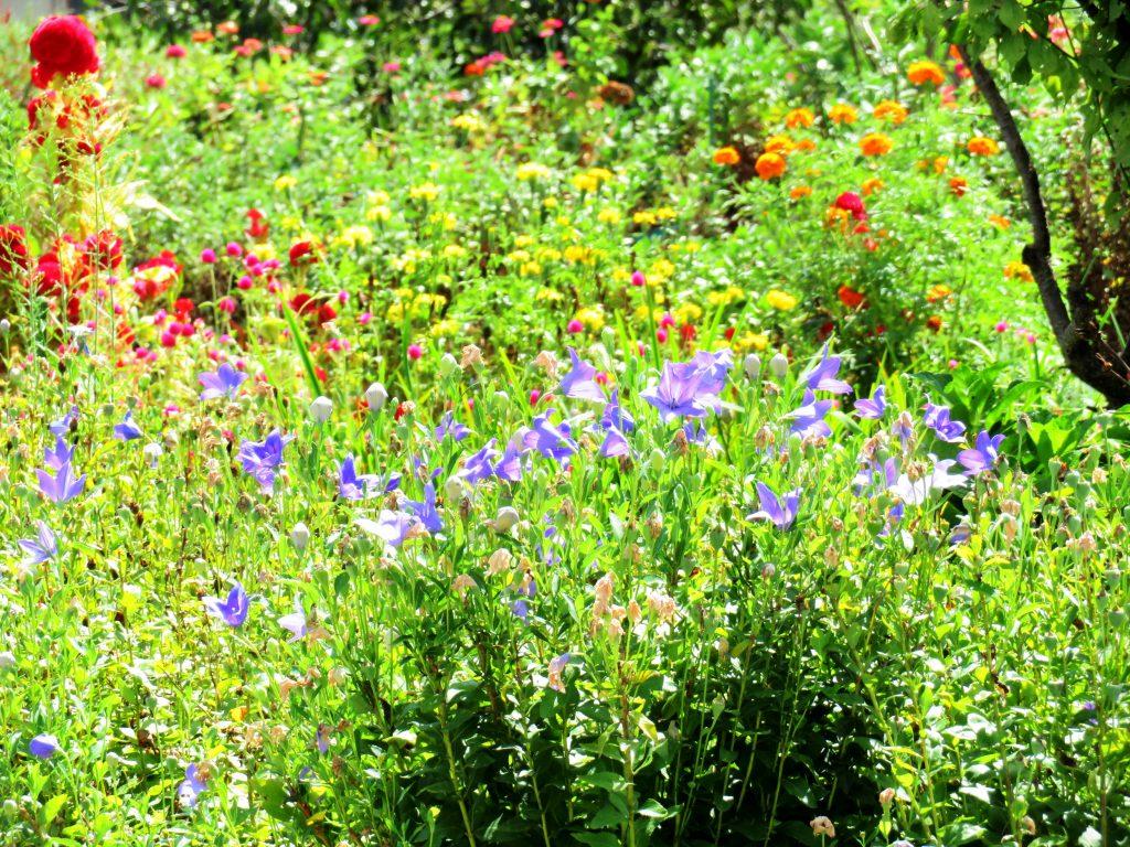 秋の畑花壇
