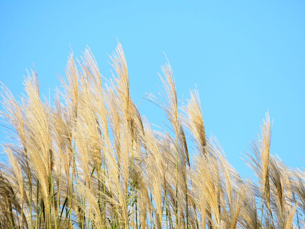 田舎の秋 10月