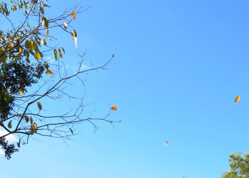 10月青空