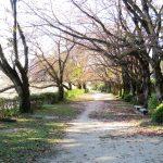 ある日の午後、秋の公園散歩 (nya.1118)