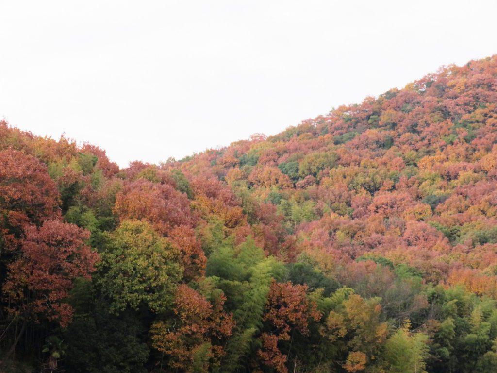 日の暮れた田舎の秋