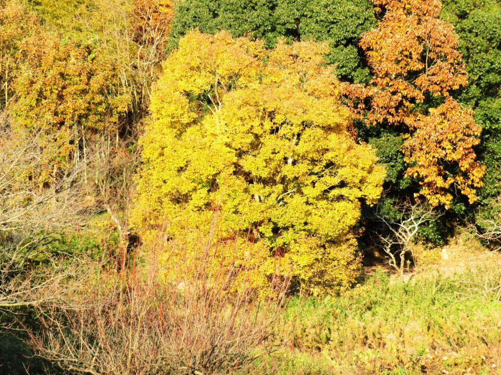 榎と樫の木
