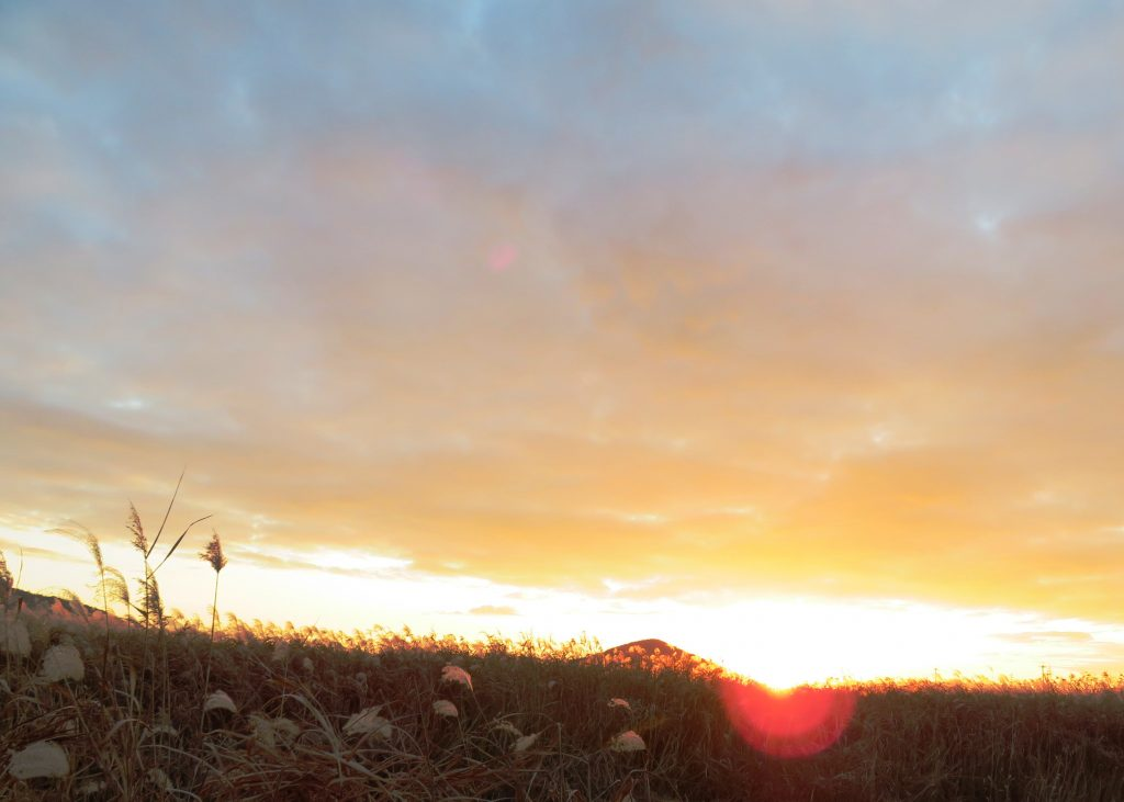 冬、すすき、夕景
