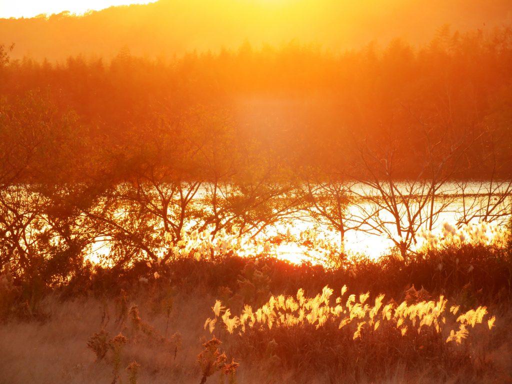 冬、河川敷夕景、すすき