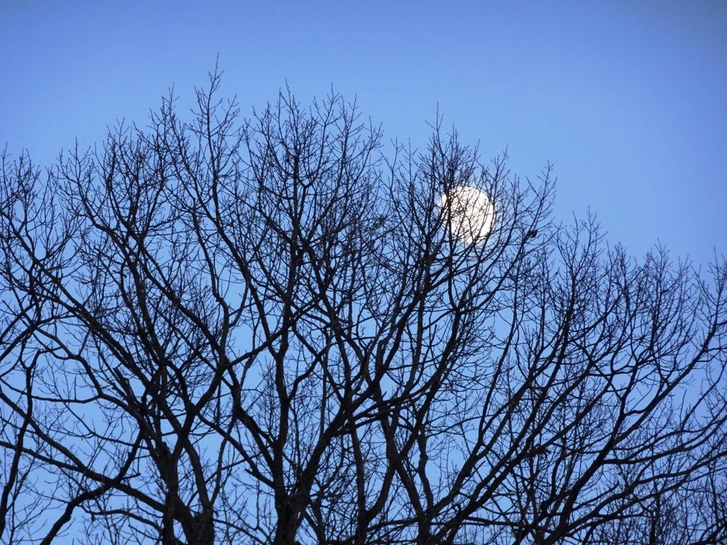 お月さま夕景