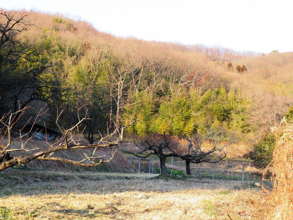 早春の田舎夕景