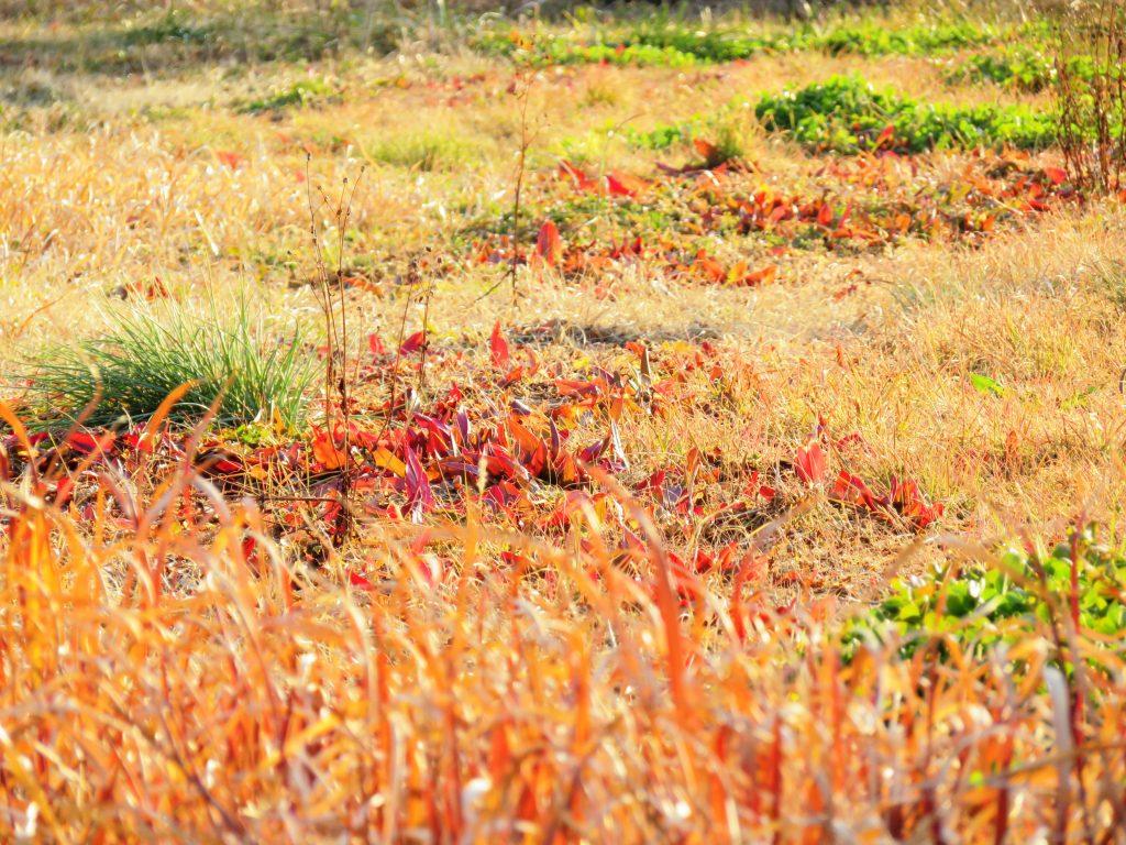 早春の野原