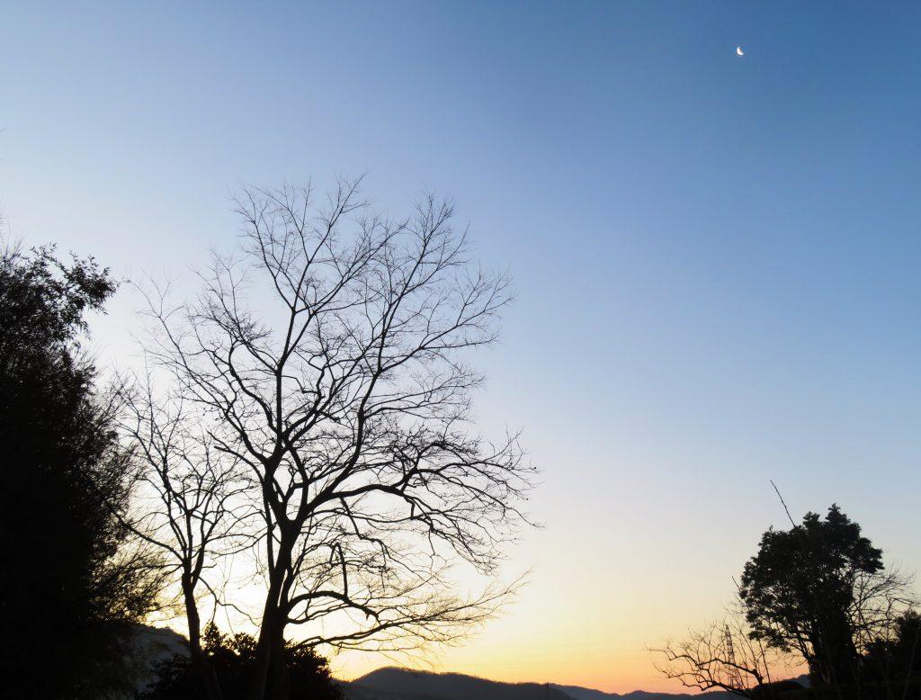 冬の早朝散歩