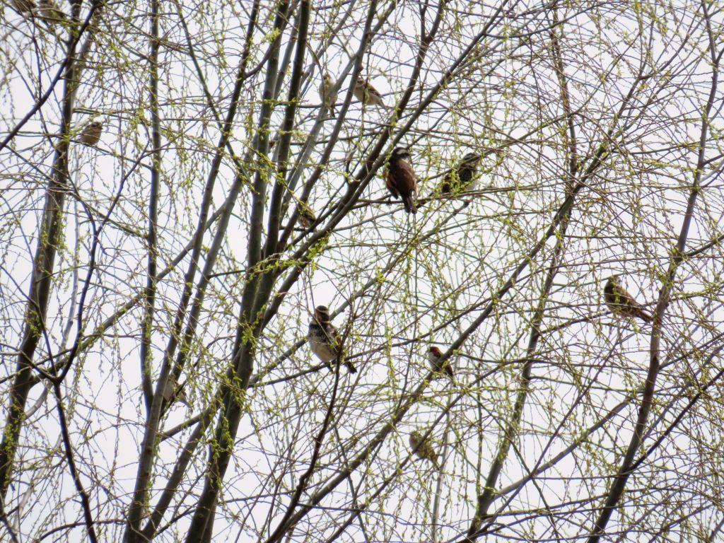 芽吹きと鳥たち