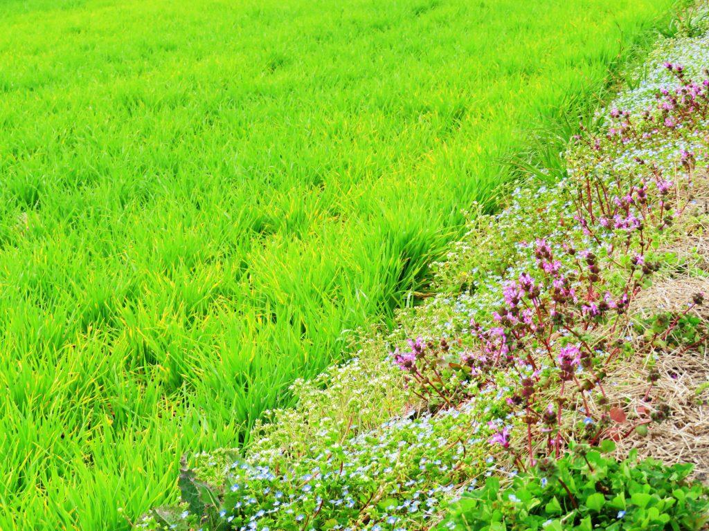 春の田舎道
