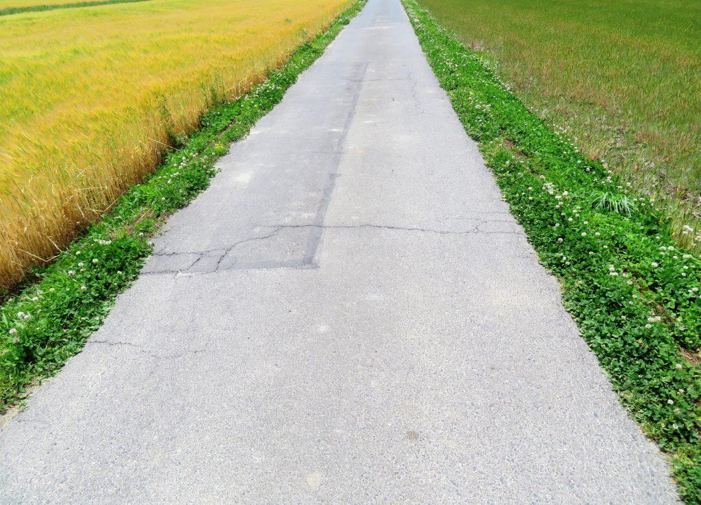 初夏の農道