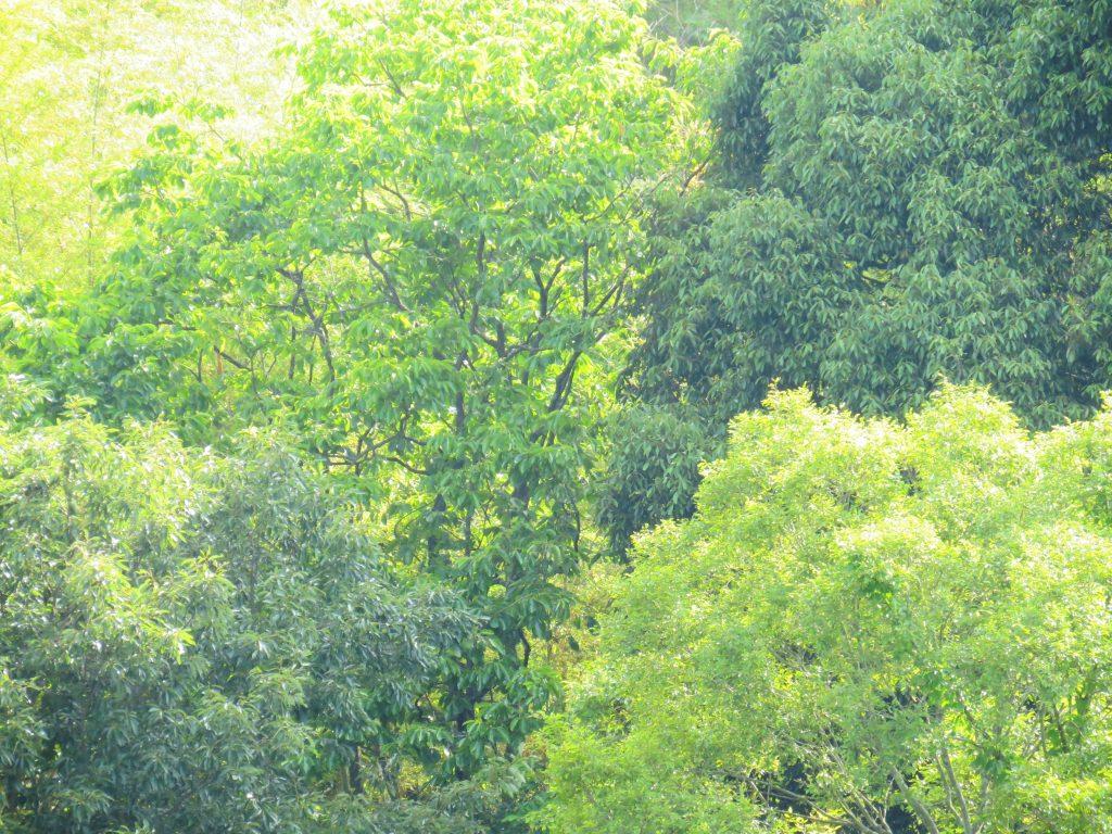 初夏の山の木々