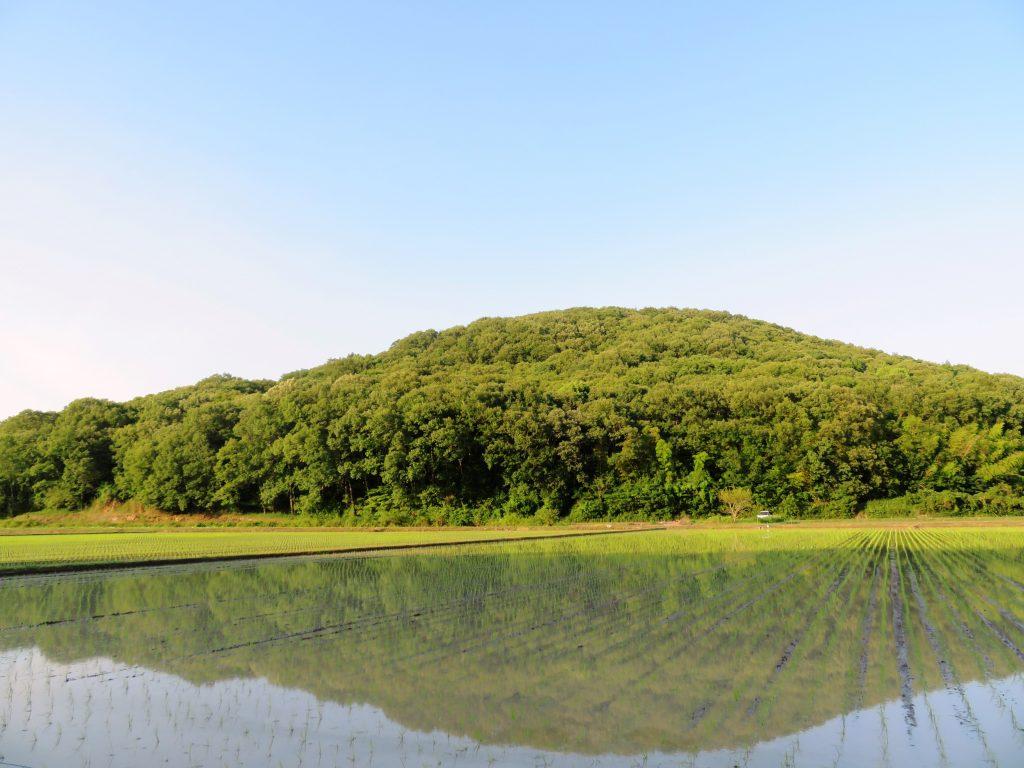 6月の田んぼ 水鏡