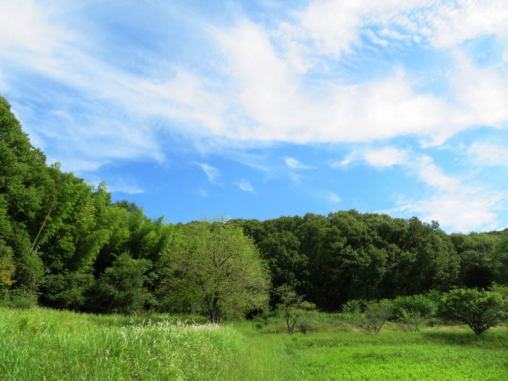 梅雨の晴れ間の田舎